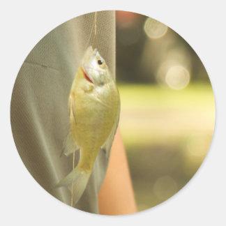 Sticker Rond Fishyy