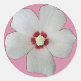 Sticker Rond Fleur blanche de ketmie