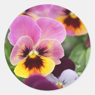 Sticker Rond Fleur rose et jaune colorée de pensée