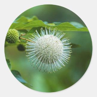 Sticker Rond Fleur sauvage de Bush de bouton de l'Alabama
