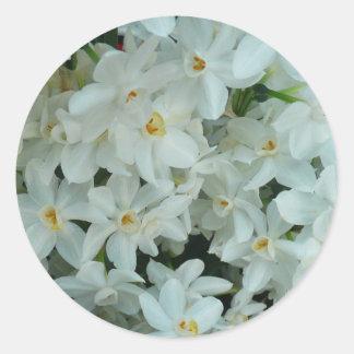 Sticker Rond Fleurs blanches sensibles de narcisse de