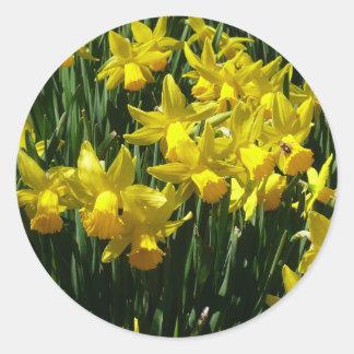 Sticker Rond Fleurs gaies de ressort des jonquilles I jaune