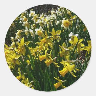Sticker Rond Fleurs jaunes et blanches de ressort de jonquilles