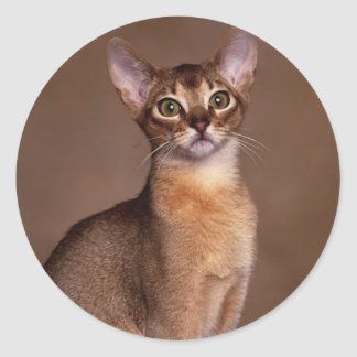 Sticker Rond funny_cat_facial_expression_13