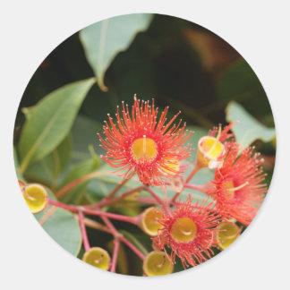Sticker Rond Gomme fleurissante rouge (ficifolia de Corymbia)