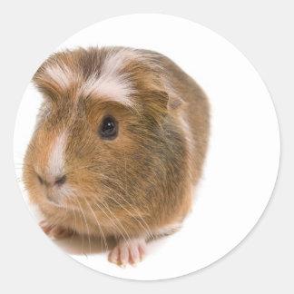 Sticker Rond guinea pigs