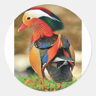 Sticker Rond habillé canard