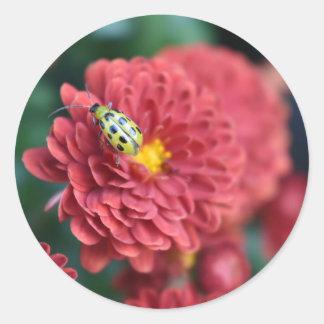 Sticker Rond Insecte rouge d'insecte de scarabée de