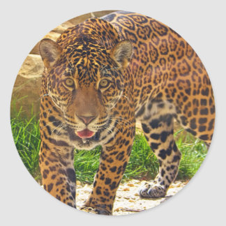 Sticker Rond Jaguar