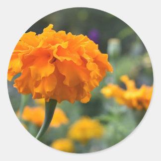 Sticker Rond Jardin orange de photographie de nature de fleur