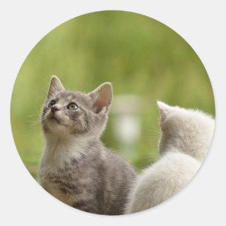 Sticker Rond Jeune nature animale sauvage curieuse animale de