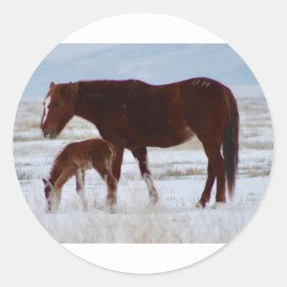 Sticker Rond Jument sauvage avec le bébé dans le désert de