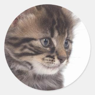 Sticker Rond kitten