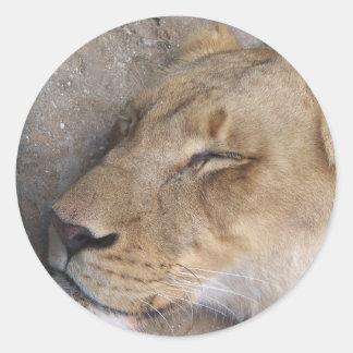 Sticker Rond Lionne de sommeil