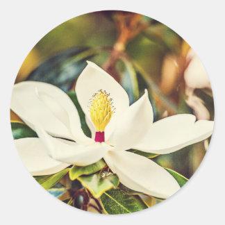 Sticker Rond Magnolia magnifique du Mississippi