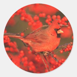 Sticker Rond Mâle cardinal du nord rouge, IL