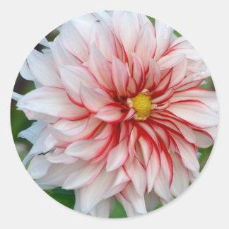 Sticker Rond Menthe poivrée florale