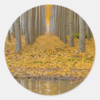 Sticker Rond _MG_3099aReflection à la ferme d'arbre de peuplier