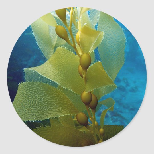 Sticker Rond Miscellaneous - Kelp Of Cat Rock (Anacapa Island)