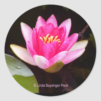 Sticker Rond Nénuphar rose