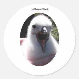 Sticker Rond Nids de poussin d'albatros dans des mains humaines