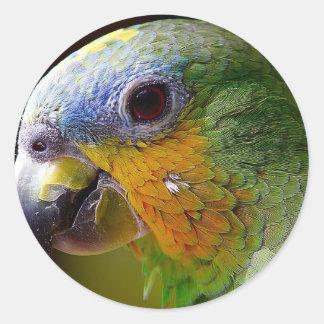 Sticker Rond Oiseau exotique de vert d'oiseau d'animaux