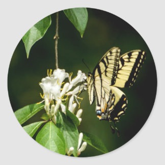 Sticker Rond Papillon de machaon de tigre sur l'autocollant de