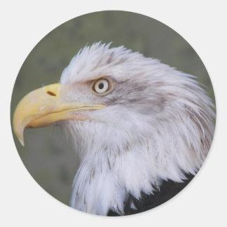Sticker Rond Photo d'Eagle chauve