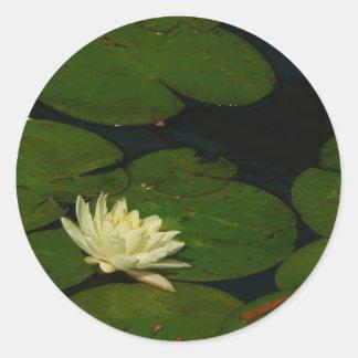 Sticker Rond Photographie florale paisible du nénuphar I blanc