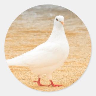 Sticker Rond Pigeon blanc mignon