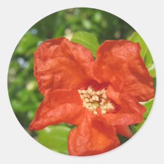 Sticker Rond Plan rapproché de fleur rouge de grenade