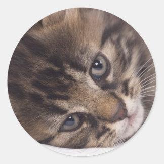 Sticker Rond portrait of tabby kitten
