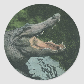 Sticker Rond Reptiles vintages de crocodile, faune marine