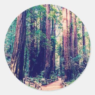 Sticker Rond Séquoias de Californie