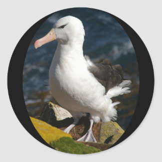 Sticker Rond Support d'albatros au sommet de falaise de mer