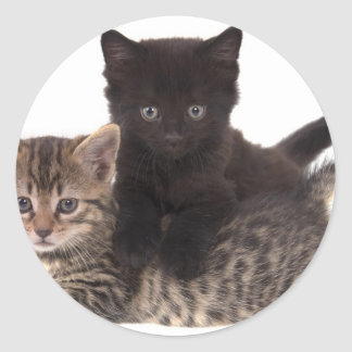 Sticker Rond tabby kitten black kitten