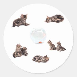 Sticker Rond tabby kittens around an aquarium,