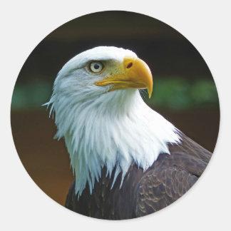 Sticker Rond Tête 001 d'Eagle chauve 02,1 rd