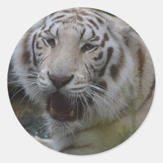 Sticker Rond Tigre blanc