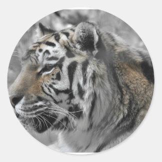 Sticker Rond Tigre blanc nature animal sauvage