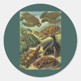 Sticker Rond Tortue vintage de terre de tortues de mer par