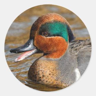 Sticker Rond Un canard turquoise viridipenne bavard à l'étang