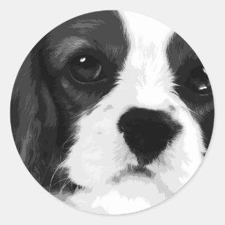 Sticker Rond Un épagneul de roi Charles cavalier noir et blanc