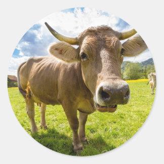 Sticker Rond Vache