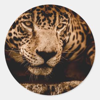 Sticker Rond yeux de égrappage de l'eau de jaguar
