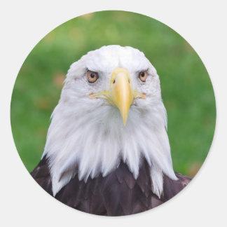 Sticker Rond Yeux d'Eagle