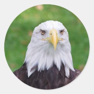 Sticker Rond Yeux d'Eagle chauve