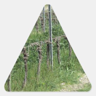 Sticker Triangulaire Champ nu de vignoble en hiver. La Toscane, Italie