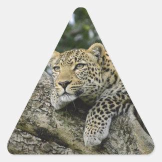 Sticker Triangulaire Chat sauvage animal de safari de l'Afrique d'arbre