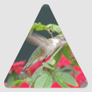 Sticker Triangulaire Colibri